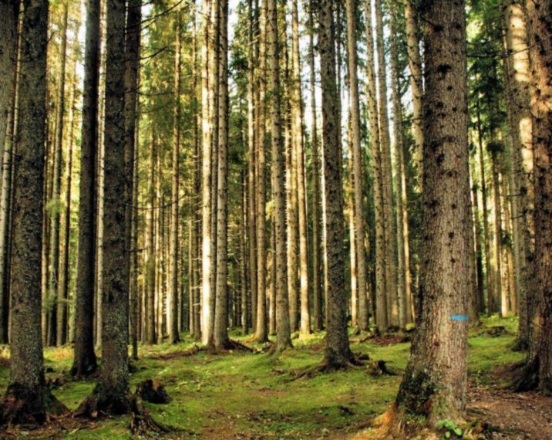 Che tipo di legno si usa per costruire una casa Costruire Bio? Da dove proviene?